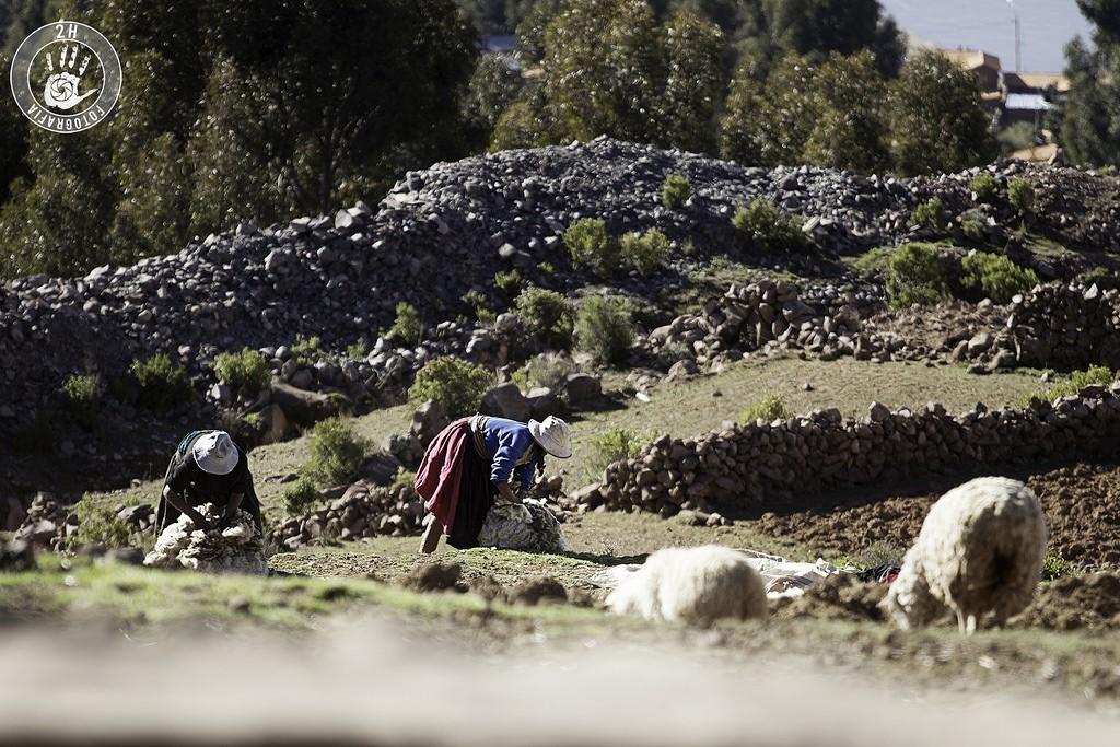 Recogiendo lana en Amantaní